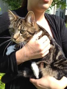 Tina kramar om den vilsna kissen